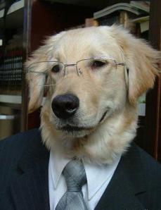 A smug dog